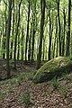 Osbecks bokskogar 2020-2.jpg