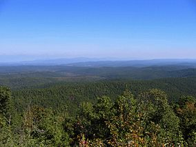 Ouachitanationalforestpicture.jpg