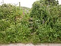 Overgrown shortcut stile. - panoramio.jpg