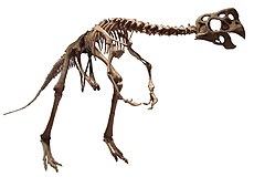 Oviraptor philoceratops white background.JPG