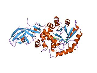 Alanine racemase class of enzymes