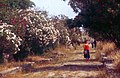 Paestum-130-Oleanderweg-1986-gje.jpg