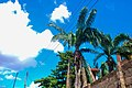 Palm tree and the sky.jpg