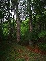 Památné stromoví Bransoudov 16.jpg