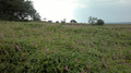 Panchgani Flowers Wallpaper.png