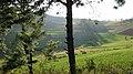 Pangetkon, Shan Hills, Myanmar, Green meadows through the trees, pastoral rural landscape.jpg