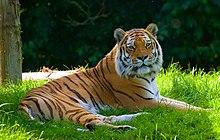 Banham Zoo - Wikipedia
