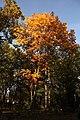 Parcul Mare (4109319691).jpg