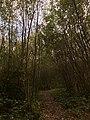 Park van Eden wandelpad.jpg