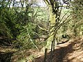 Path, through Rectory Wood - geograph.org.uk - 1250195.jpg