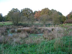 Tall grass partially obscures the view of marshland in the foreground. Beyond it is woodland. Most of the trees have green leaves; on one tree, the leaves are an orange-brown colour.