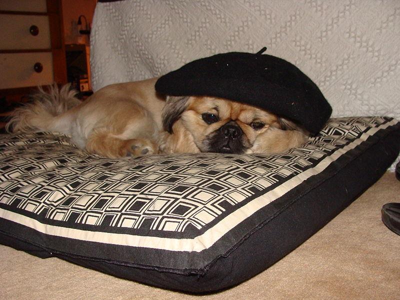 cama-perros