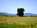 Pelagonia Plain 10.JPG