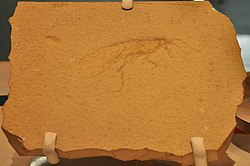 Perot Museum of Nature and Science - Jurassic grasshopper fossil 01.jpg