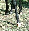 Horsefeet2.jpg