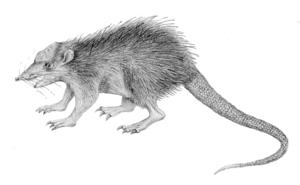 Pholidocercus - Restoration
