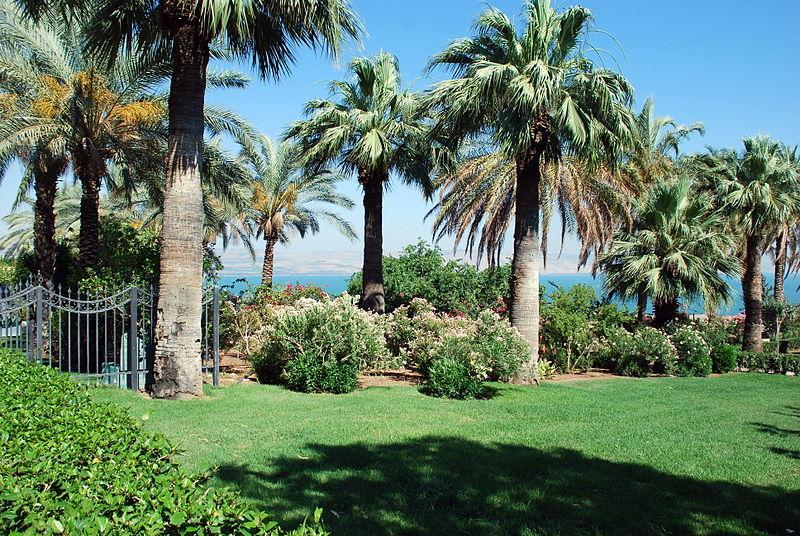 Palm Trees Sea Of Galilee