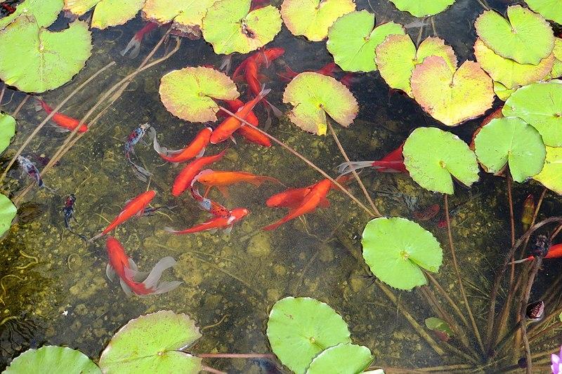 הבריכה האקולוגית במתחם שרונה
