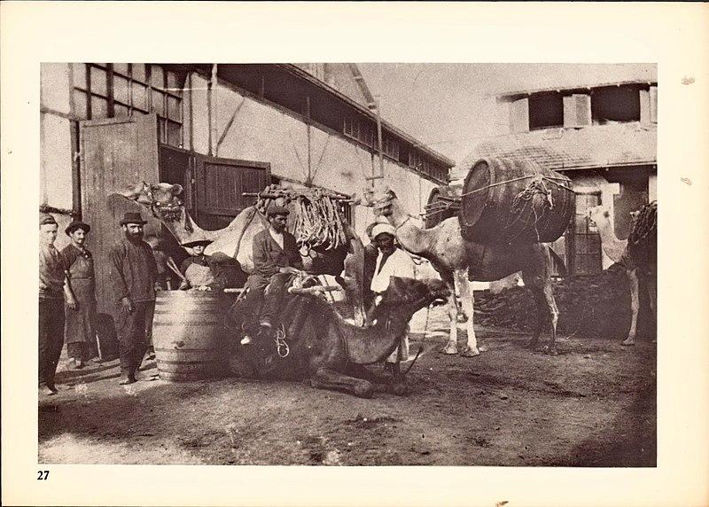 הובלה של חביות יין לנמל יפו