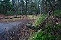 Pinky v lese severně od města, Kunštát, okres Blansko (02).jpg