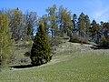 Plāteres pilskalns 2003-05-10.jpg