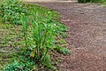 Plant 95 (32306966645).jpg