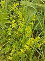 Plante de pelouses 20150523 163004 - 02.jpg