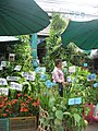 Plants chatuchak.jpg
