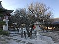 Plum trees in Tsunashiki Temman Shrine 3.jpg
