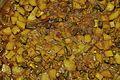 Pointed Gourd & Potato Curry - Kolkata 2011-04-02 2196.JPG