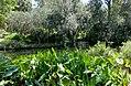 Pond - Bok Tower Gardens - DSC02246.jpg