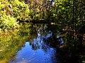 Pond - panoramio (22).jpg