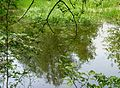Pond Mouscron J1.jpg