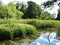 Pond and reeds - geograph.org.uk - 609897.jpg