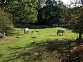 Ponies near Linford - geograph.org.uk - 1544497.jpg