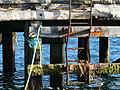 Port Stanley harbour - Copie (2) (3445580192).jpg