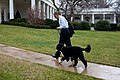 President Barack Obama walks toward the Oval Office with Bo.jpg