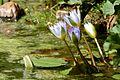 Pretoria Botanical Gardens-048.jpg