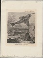 Prosopodasys trachinoides - 1700-1880 - Print - Iconographia Zoologica - Special Collections University of Amsterdam - UBA01 IZ13300063.tif