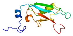 Protein SF3A1 PDB 1we7.png