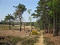 Public Footpath, Bagshot Heath - geograph.org.uk - 1262531.jpg