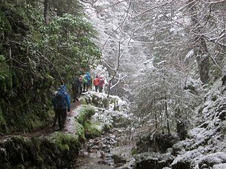 Argyll Forest Park - Puck's Glen ravine, in winter