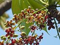 Punava (Marathi- पुनव) (2334250747).jpg