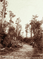 Queensland State Archives 2463 Peachester to Crohamhurst Road c 1894.png