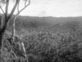 Queensland State Archives 435 Canungra Lamington National Park Beaudesert Shire September 1933.png
