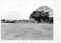 Queensland State Archives 4926 Graded Parkland New Farm October 1953.png