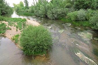 Río Pisuerga 2.jpg