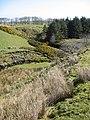 Raven's Craig Glen - geograph.org.uk - 398759.jpg