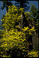Redwood National Park REDW9345.jpg