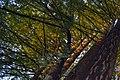 Redwoodmorning.JPG